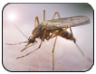 Preventing the Infection of West Nile