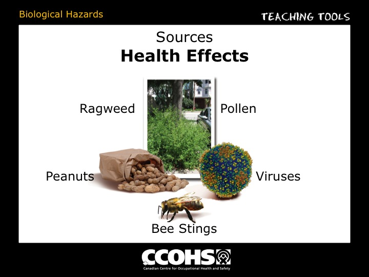 The Young Workers Zone Teaching Tools Biological Hazards Sources